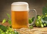 Hoa bia và lúa mạch là 2 nguyên liệu chính làm ra những cốc bia ngon lành - ảnh minh họa từ Internet