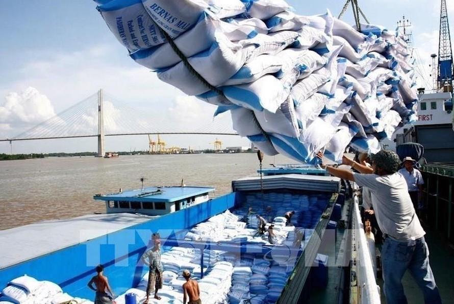 Tạm dừng ký hợp đồng xuất khẩu gạo mới. Ảnh: TTXVN