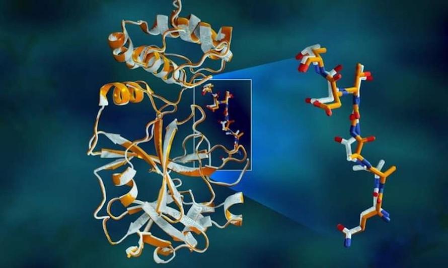 Dữ liệu X-quang chồng chéo của protease trong SARS-CoV-2 cho thấy sự khác biệt về cấu trúc giữa protein ở nhiệt độ phòng (màu cam) và cấu trúc đông lạnh (màu trắng). Ảnh: Phòng thí nghiệm quốc gia Oak Ridge và Argonne (thuộc Bộ Năng lượng Mỹ).