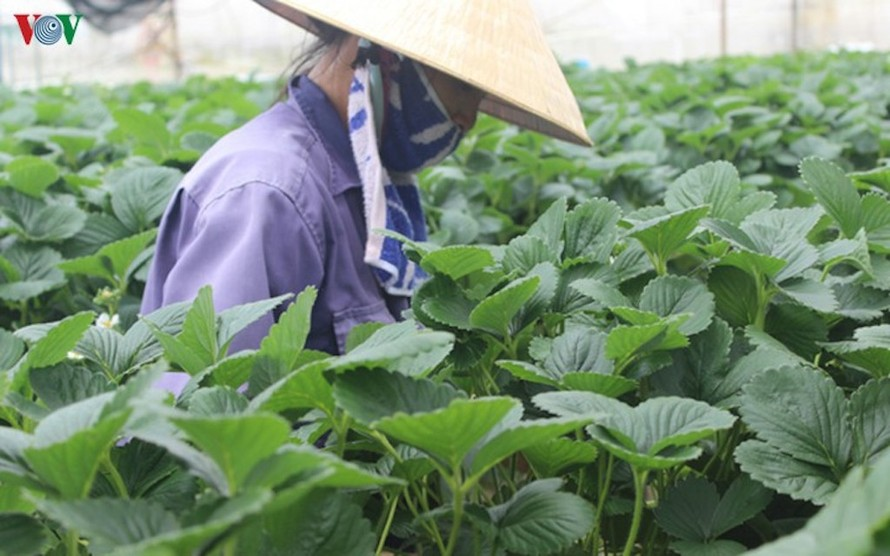 Sáu tháng đầu năm 2020, ngành nông nghiệp vượt qua nhiều biến động, góp phần quan trọng vào mức tăng trưởng 1,81% GDP của nền kinh tế.