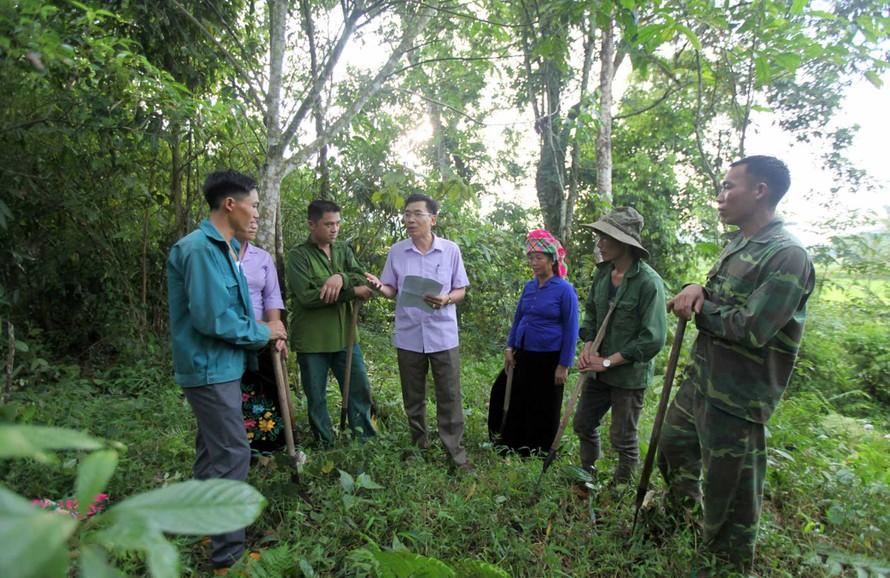 Việt Nam được hưởng lợi ích 'kép' của việc chuyển nhượng lượng giảm phát thải từ rừng
