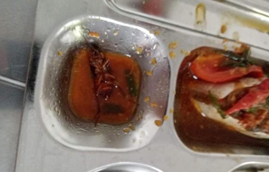 TPHCM chỉ đạo quyết liệt xử lý vụ gián xuất hiện trong bữa cơm của học sinh