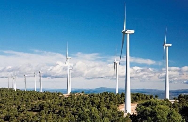 Vietracimex xin chặt rừng xây nhà máy điện gió!