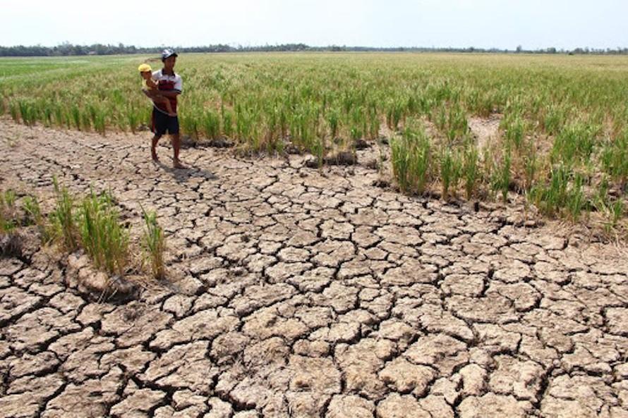 Quảng Nam đối diện tình trạng khô hạn và nhiễm mặn trên diện rộng