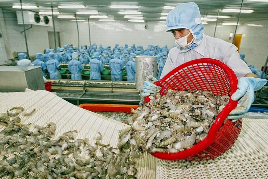 Hiệu quả Hiệp định EVFTA: Xuất khẩu tôm của Việt Nam tận dụng tốt hiệu quả