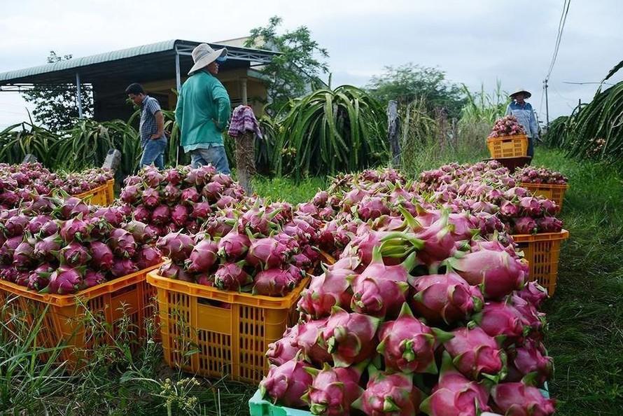 Phó thủ tướng Lê Văn Thành: Thúc đẩy lưu thông, tiêu thụ nông sản