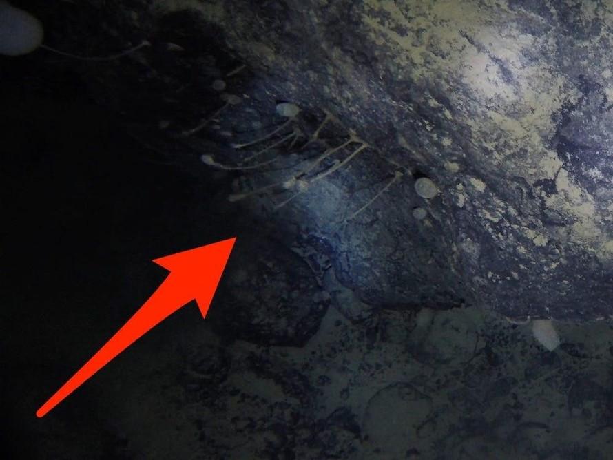 Hình ảnh từ video cho thấy hình ảnh sinh vật dưới băng ở Nam Cực, có hình dạng tương tự bọt biển. (Ảnh: TS. Huw Griffiths/Insider)