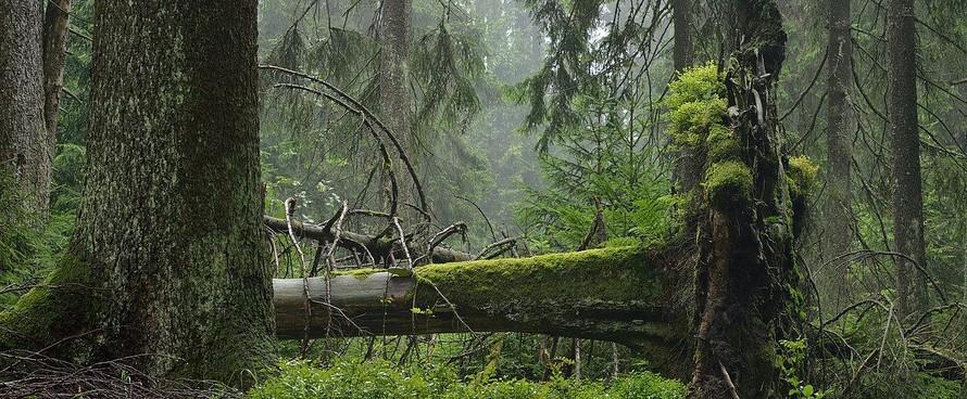 """Nhóm nghiên cứu cảnh báo thế giới đang mất các khu rừng với tốc độ """"đáng sợ"""", nhanh hơn nhiều so với tốc độ rừng được tái sinh. (Ảnh: WWF)"""
