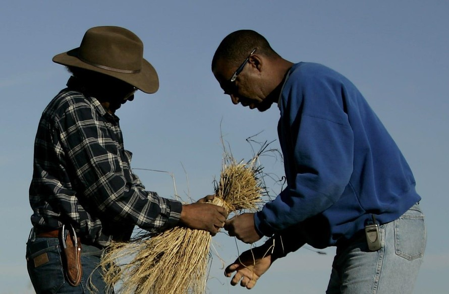 Từ cuối những năm 1800 cho đến đầu thế kỷ 21, các gia đình da màu đã mất gần 98% đất đai, và số lượng nông dân da màu đã giảm từ hơn 1 triệu người xuống còn dưới 50.000 người hiện nay. (Ảnh: USA Today)