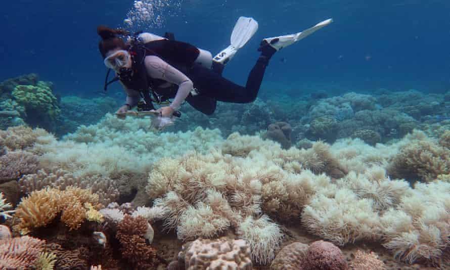 Các nhà khoa học đánh giá cao khuyến nghị liên quan đến Rạn san hô Great Barrier của UNESCO