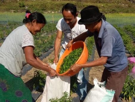 Nông dân chiến thắng trong cuộc chiến chống lại khí hậu và địa hình để bắt đầu trồng ớt trong nước.