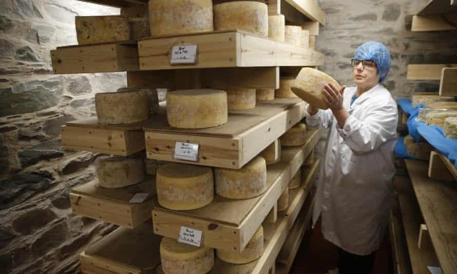 Blue Cheese được chế biến tại một cửa hàng sữa ở Castle Douglas, Scotland. Ảnh: Murdo MacLeod