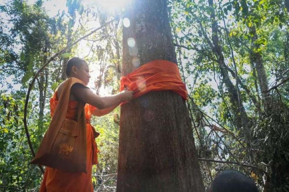 Chiến binh bảo vệ môi trường: Nhà sư Phật giáo và lễ quy y cho cây